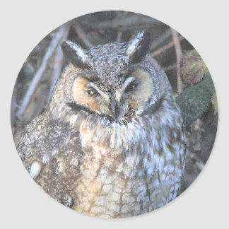 Mooie lang-Eared Uil bij Zonsondergang Ronde Sticker