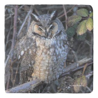 Mooie lang-Eared Uil bij Zonsondergang Trivet