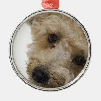 Mooie Ogen van een Puppy van Yorkie Poo Zilverkleurig Rond Ornament