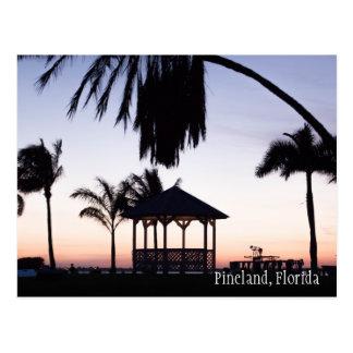Mooie Pineland Florida Briefkaart