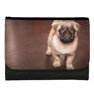Mooie Pug van het Puppy, Hond, Huisdier, Dier