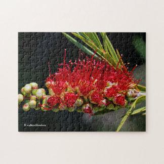 Mooie Rode Bloemen Bottlebrush Puzzel