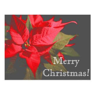 Mooie Rode Vrolijke Kerstmis van de Bloem van Briefkaart