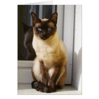Mooie Siamese Kat Briefkaarten 0