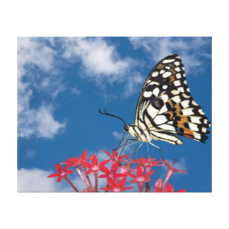 Mooie Vlinder Canvas Afdruk