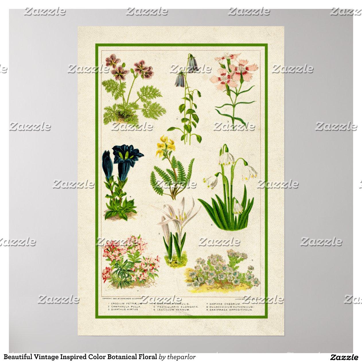 mooie wijnoogst ge nspireerde botanische bloemen poster zazzle. Black Bedroom Furniture Sets. Home Design Ideas
