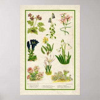 Mooie Wijnoogst Geïnspireerde Botanische Bloemen Poster