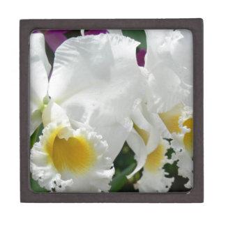 Mooie Witte Orchideeën in de Doos van de Juwelen Premium Juwelen Doos