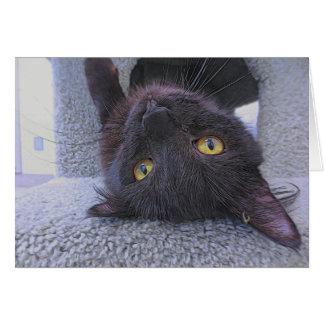 Mooie Zwarte Kat Kaart