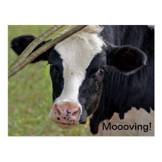 Moooving Announcment Briefkaart