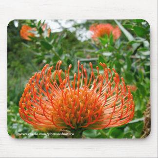 Mousepad - Protea de bloem van het speldkussen Muismat