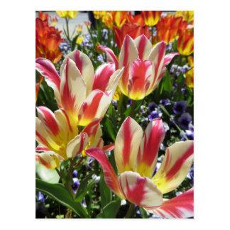 Multicolored Bloemen Briefkaart