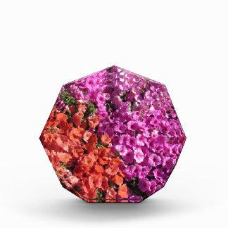 Multicolored petunia bloeit textuurachtergrond acryl prijs