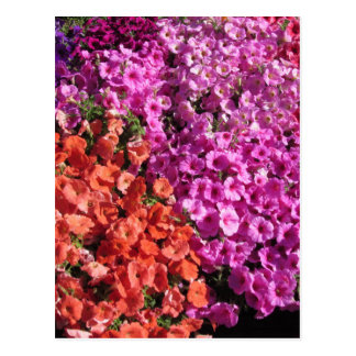 Multicolored petunia bloeit textuurachtergrond briefkaart