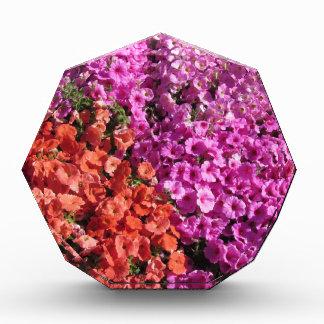 Multicolored petunia bloeit textuurachtergrond prijs