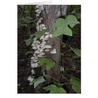 Mushroom4 Briefkaarten 0