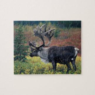 Na, de V.S., Alaska, Denali NP, kariboe 3 van de S Puzzel