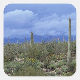 Na, de V.S., Arizona, Nationaal Monument Saguaro, Vierkante Sticker