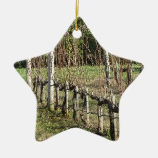 Naakt wijngaardgebied in de winter. Toscanië, Keramisch Ster Ornament