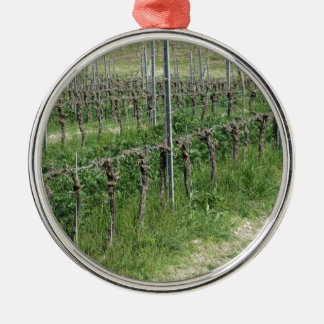 Naakt wijngaardgebied in de winter. Toscanië, Zilverkleurig Rond Ornament