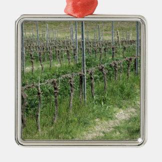 Naakt wijngaardgebied in de winter. Toscanië, Zilverkleurig Vierkant Ornament