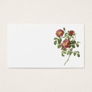nam van liefde (Rosa pumila) toe met Redouté Visitekaartjes