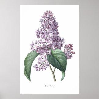 Natuur, botanische druk, bloemkunst van Sering Poster