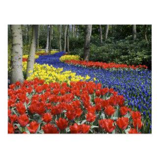Nederland, Holland, Lisse, Tuinen Keukenhof Briefkaart
