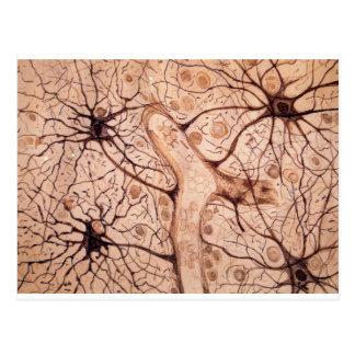 Neuronen 3 van Cajal Briefkaart
