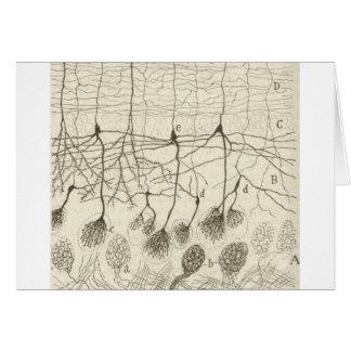 Neuronen 8 van Cajal Briefkaarten 0
