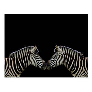 Neus twee Zebras aan Neus Briefkaart