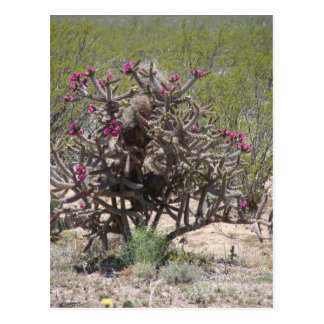 New Mexico Cholla in Bloei Briefkaart