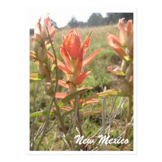 New Mexico Wildflowers Briefkaart