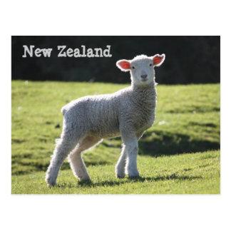 Nieuw Zeeland - Schattig Lam die u bekijken Briefkaart