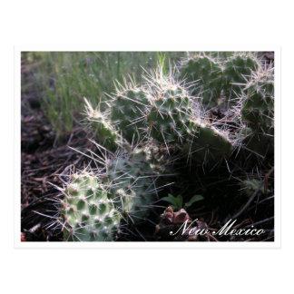 Nieuwe Mexicaanse Cactus Briefkaart
