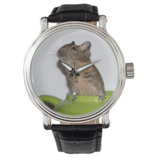 Nieuwsgierige Degu in een Groene Theepot Horloges