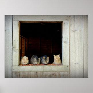 Nieuwsgierige Katten Chowing neer Poster
