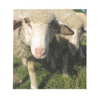 Nieuwsgierige schapen notitieblok