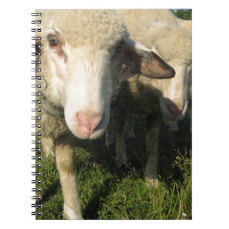 Nieuwsgierige schapen ringband notitieboek