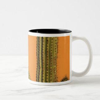 Noord-Amerika, Mexico, Baja Californië, Cabo Tweekleurige Koffiemok