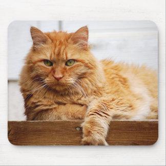 Noorse BosKat, Koning van Katten Mousepad Muismatten