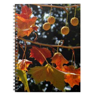 Notitieboekje/Persoonlijk Dagboek - Sycomoor en Notitieboek
