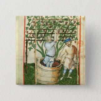 Nouv Acq de Verzamelende en dringende druiven van Vierkante Button 5,1 Cm
