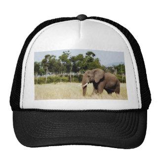 Olifant die het pet van Kenia van de Vlaktes van M