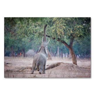 Olifant die voor de boom van de Acacia bereiken Kaart