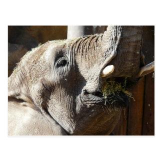 olifant het eten briefkaart