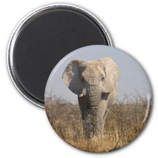 Olifant Koelkast Magneetjes