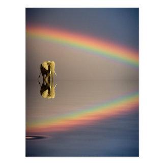 Olifant, water, en regenboog, Kenia Briefkaart