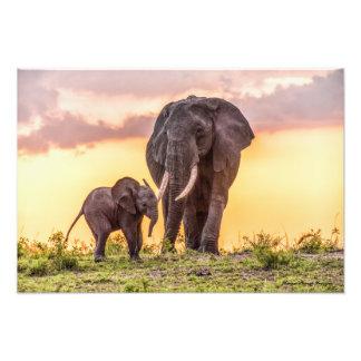 Olifanten bij de Druk van de Zonsondergang Fotografische Afdruk
