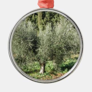 Olijfbomen in een zonnige dag. Toscanië, Italië Zilverkleurig Rond Ornament